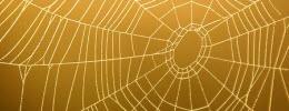 Spindelstammning